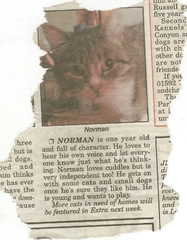 normanthecat